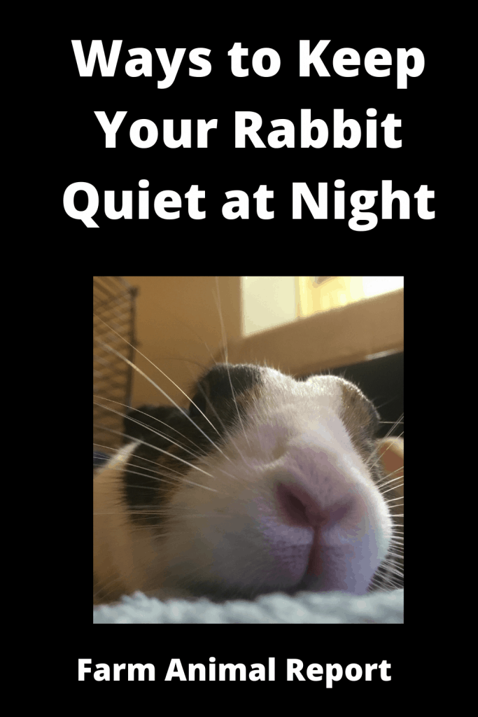 13 Ways to Keep Your Rabbit Quiet at Night 3