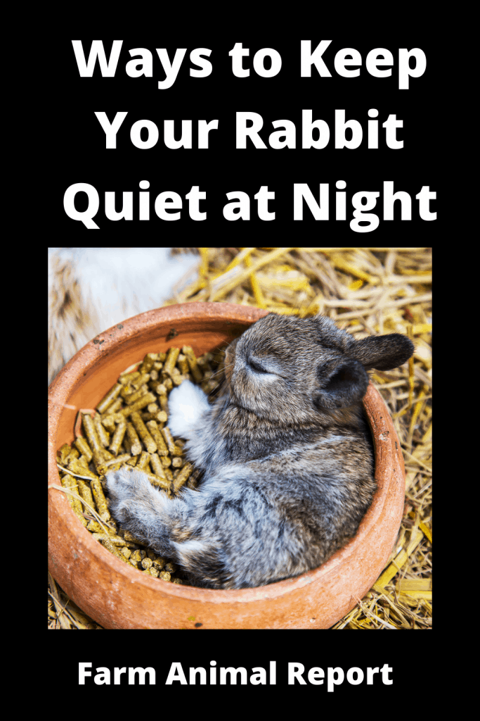 13 Ways to Keep Your Rabbit Quiet at Night 4