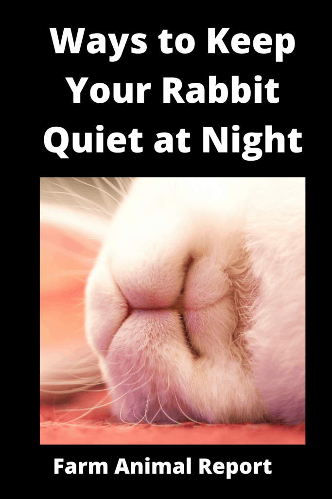 13 Ways to Keep Your Rabbit Quiet at Night 1