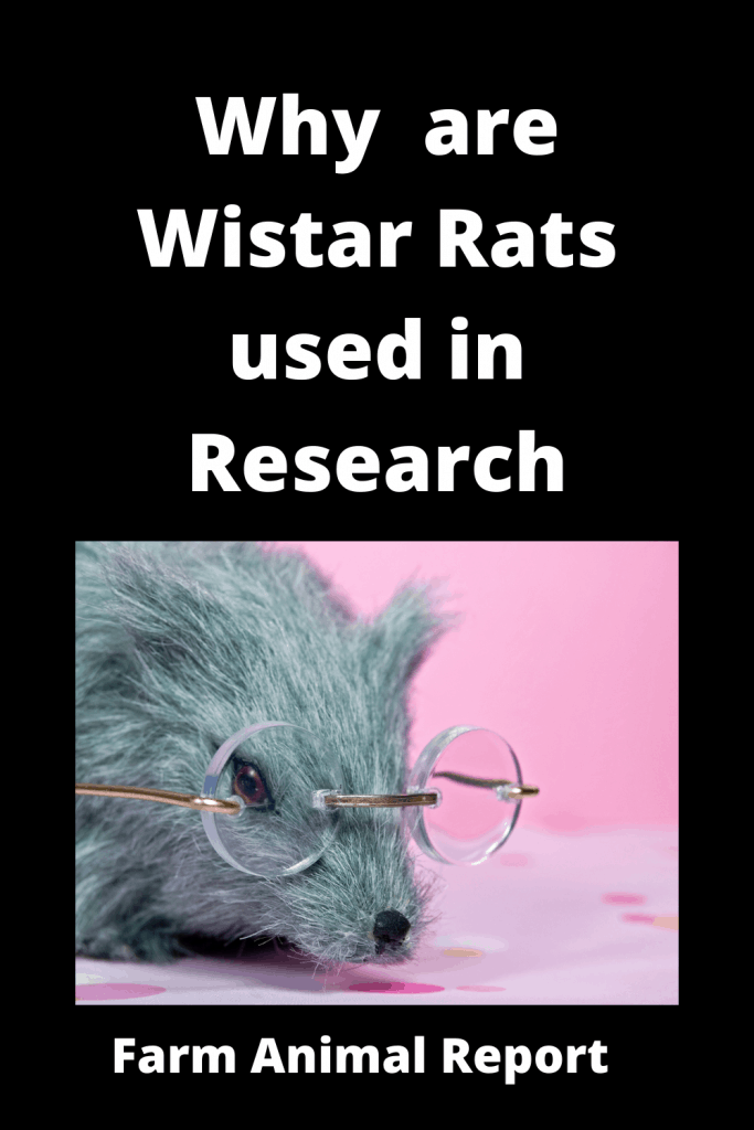 Why  are Wistar Rats used in Research 2