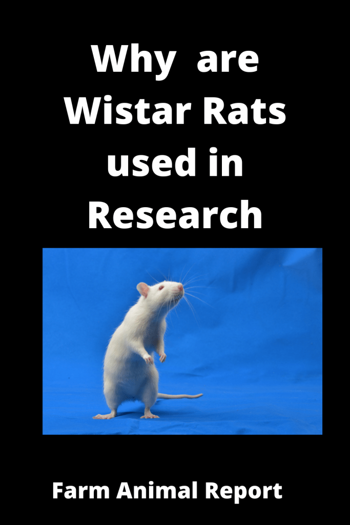 Why  are Wistar Rats used in Research 1