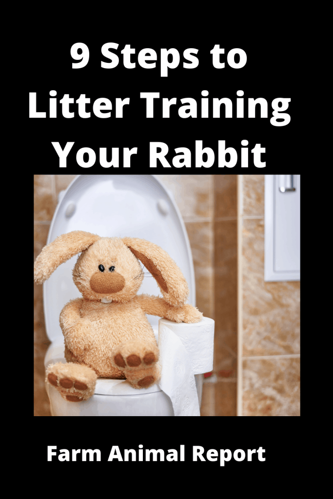 9 Steps to Litter Training Your Rabbit? 2