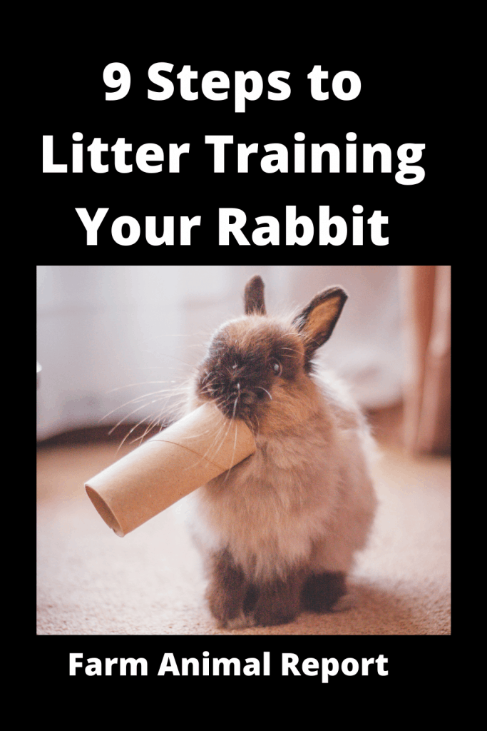 9 Steps to Litter Training Your Rabbit? 3