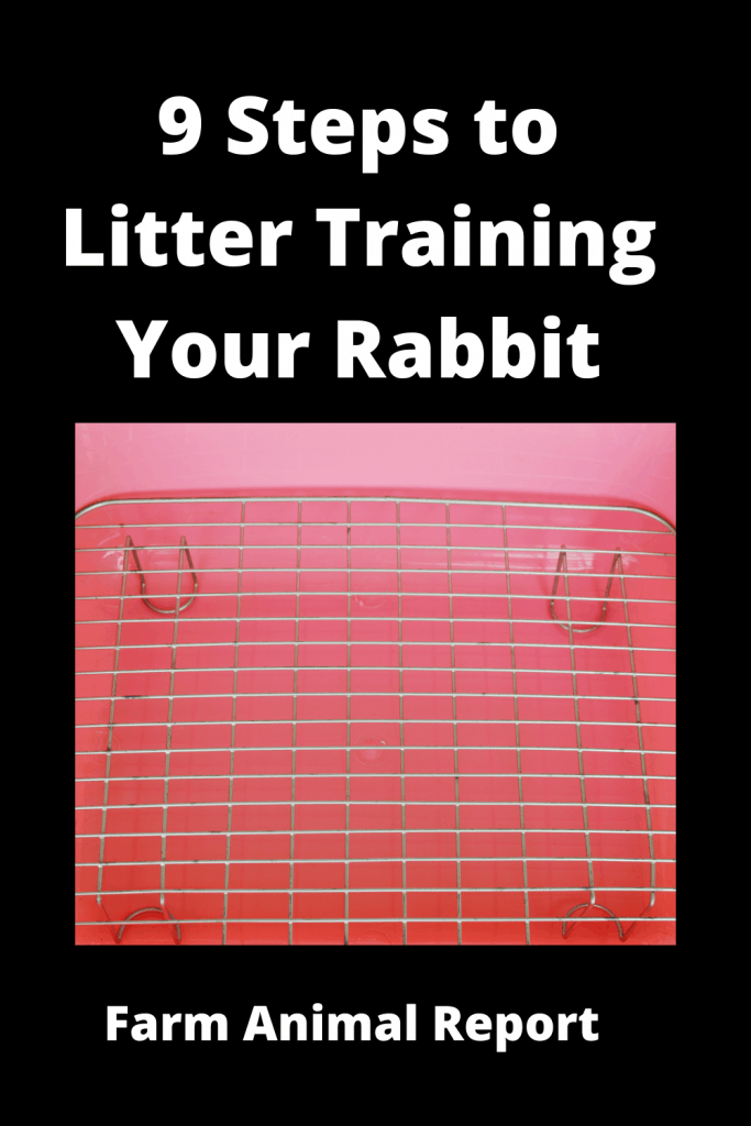 9 Steps to Litter Training Your Rabbit? 4