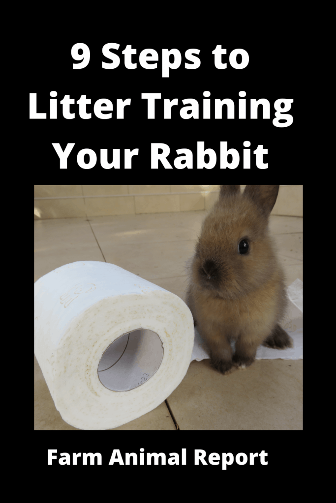 9 Steps to Litter Training Your Rabbit? 1