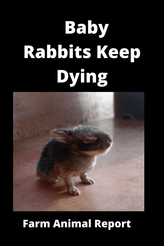 6 Reasons your Baby Rabbits Keep Dying 3