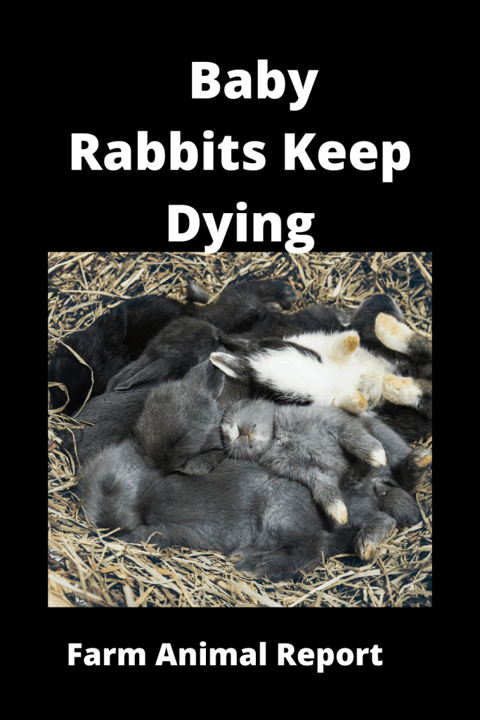 6 Reasons your Baby Rabbits Keep Dying 4