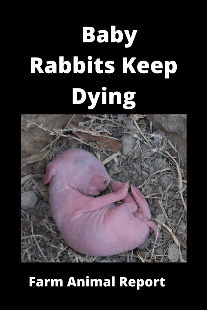 6 Reasons your Baby Rabbits Keep Dying 1