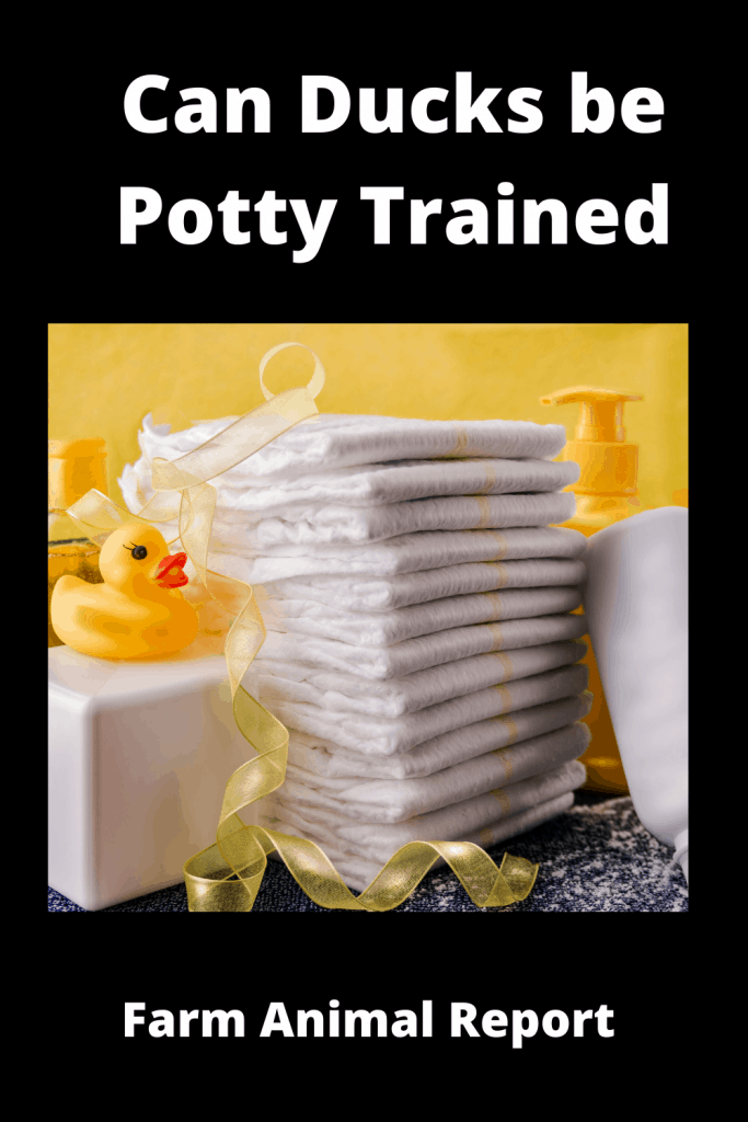 Can Ducks be Potty Trained 2