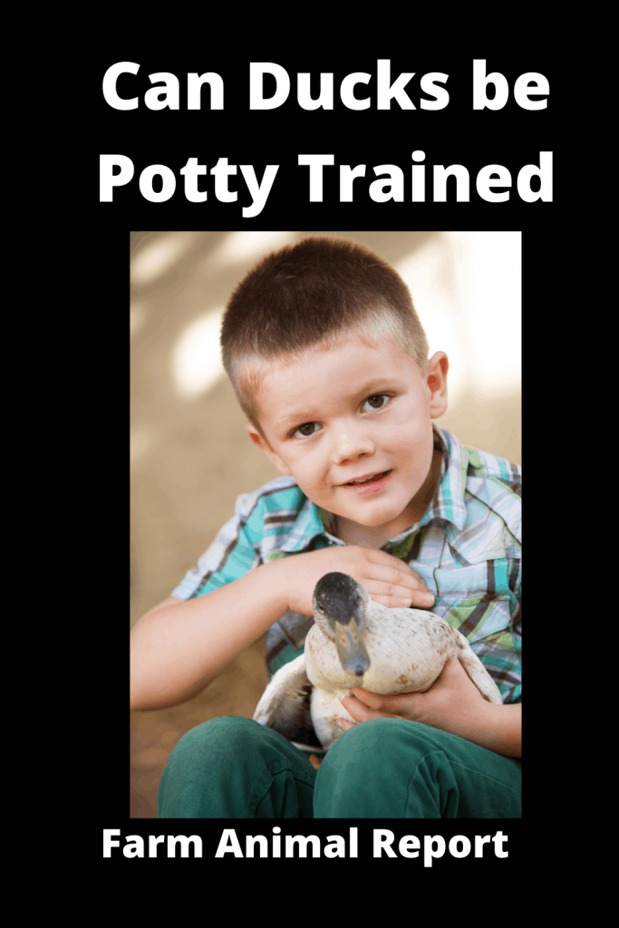 Can Ducks be Potty Trained 1
