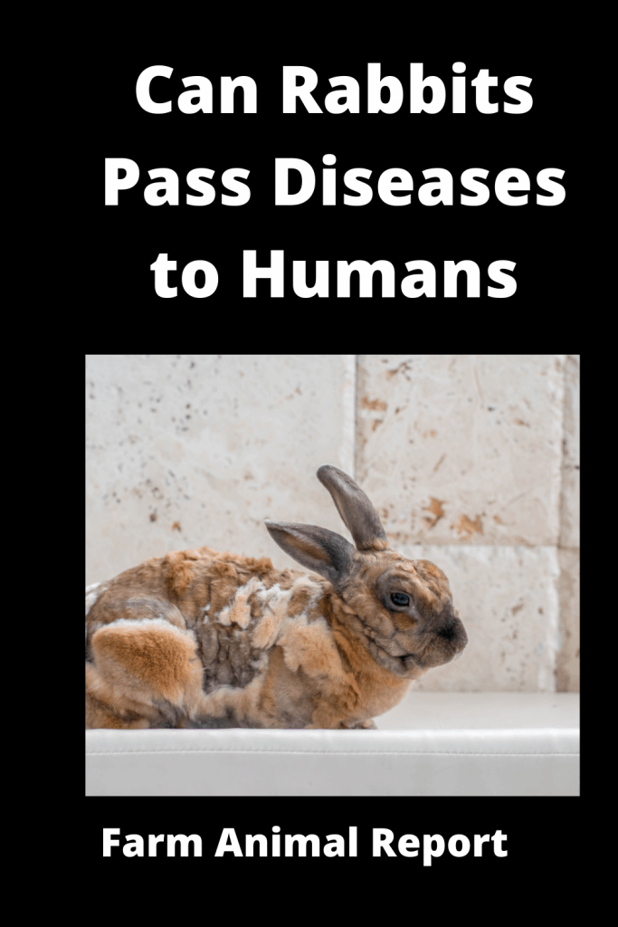Can Rabbits Pass Diseases to Humans? 4 Types 1