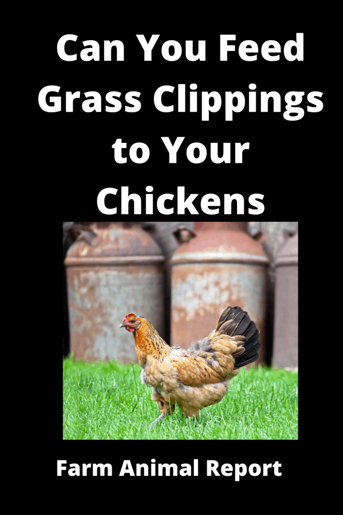 Can You Feed Grass Clippings to Your Chickens 18 Pros / Con (with Videos) 2