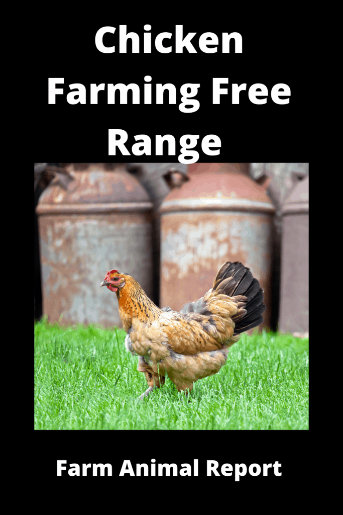 Chicken Farming Free Range vs Chicken Run (3 Videos) 2