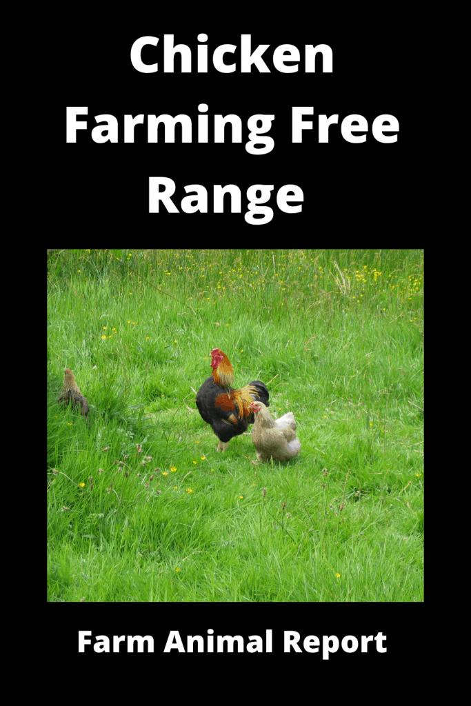 Chicken Farming Free Range vs Chicken Run (3 Videos) 3
