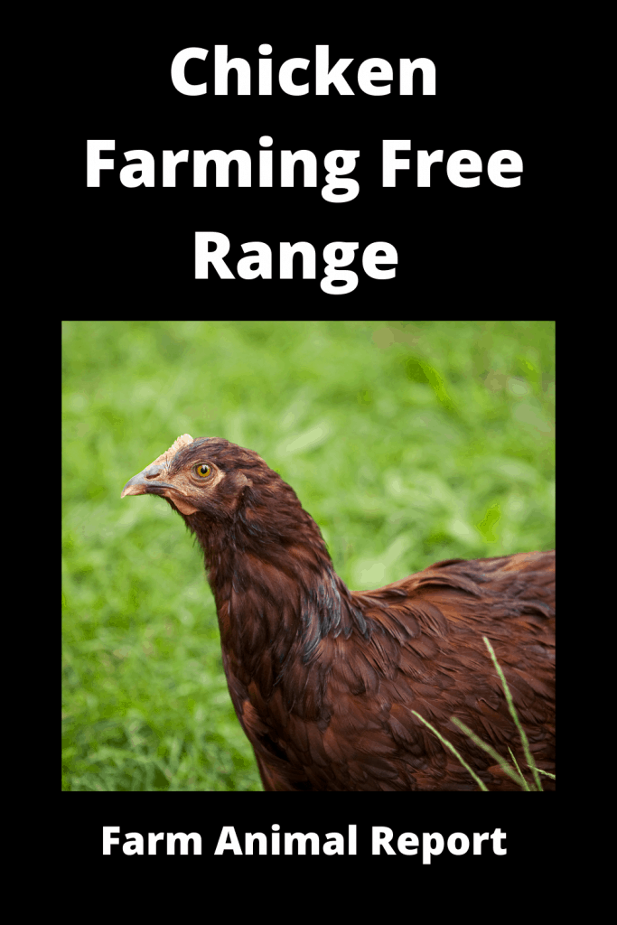Chicken Farming Free Range vs Chicken Run (3 Videos) 4