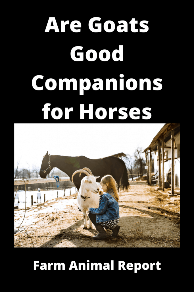 Are Goats Good Companions for Horses - 3 Examples 2