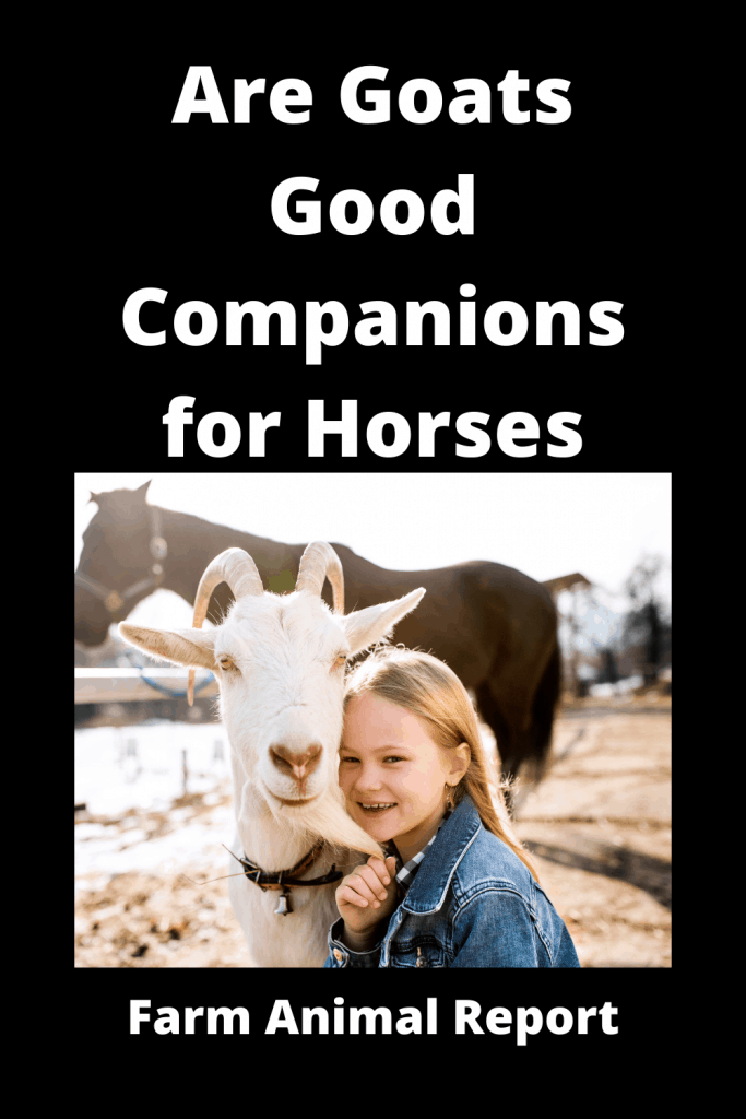 Are Goats Good Companions for Horses - 3 Examples 1
