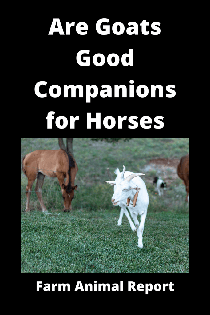 Are Goats Good Companions for Horses - 3 Examples 4