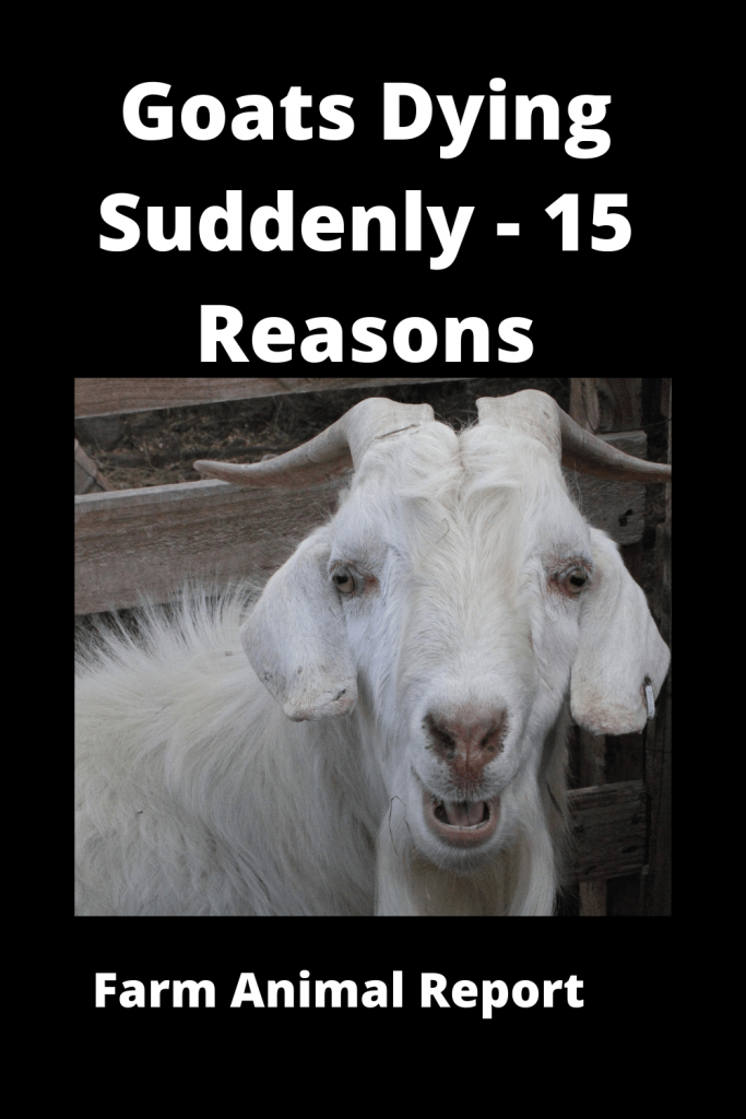 Goats Dying Suddenly - 15 Reasons 2
