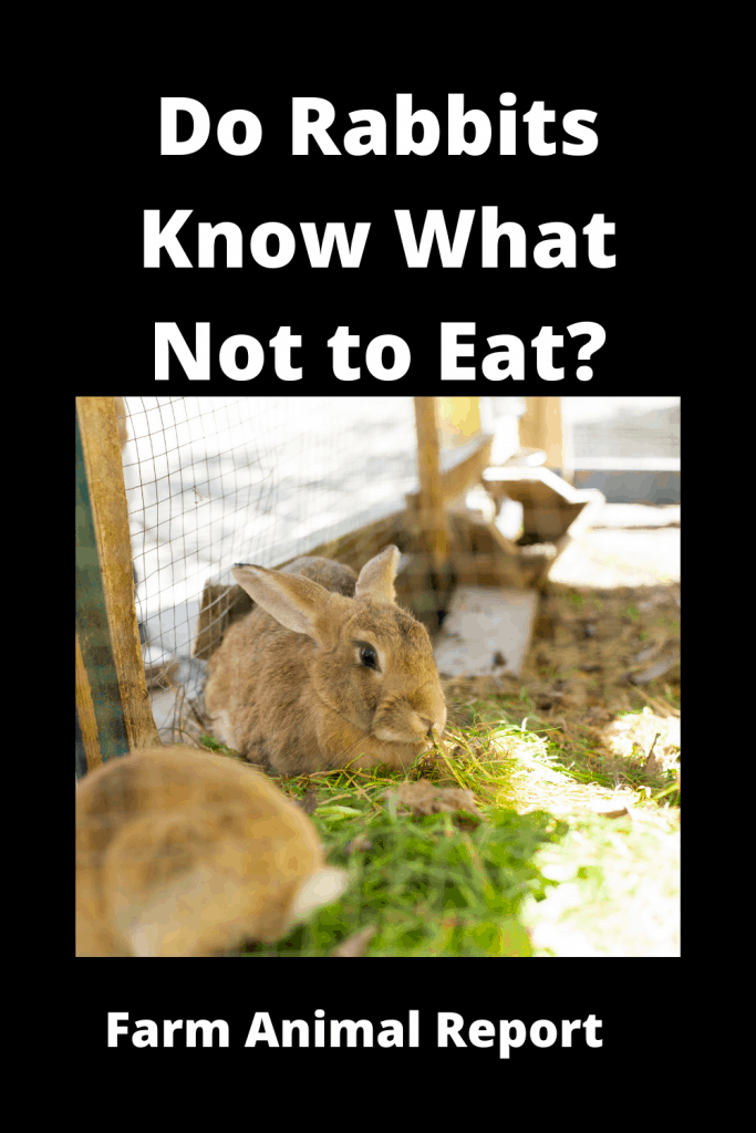 Do Rabbits Know What Not to Eat? 2