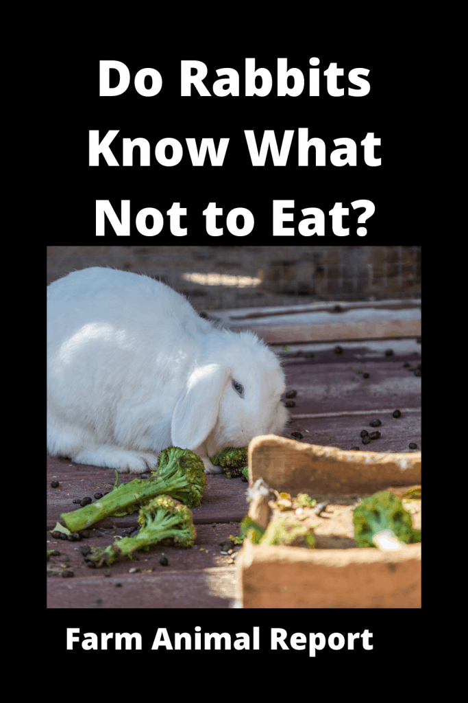 Do Rabbits Know What Not to Eat? 1