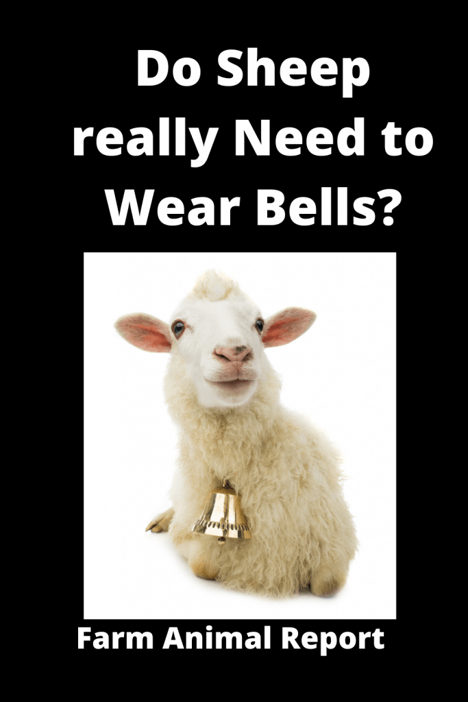 Do Sheep really Need to Wear Bells? 3