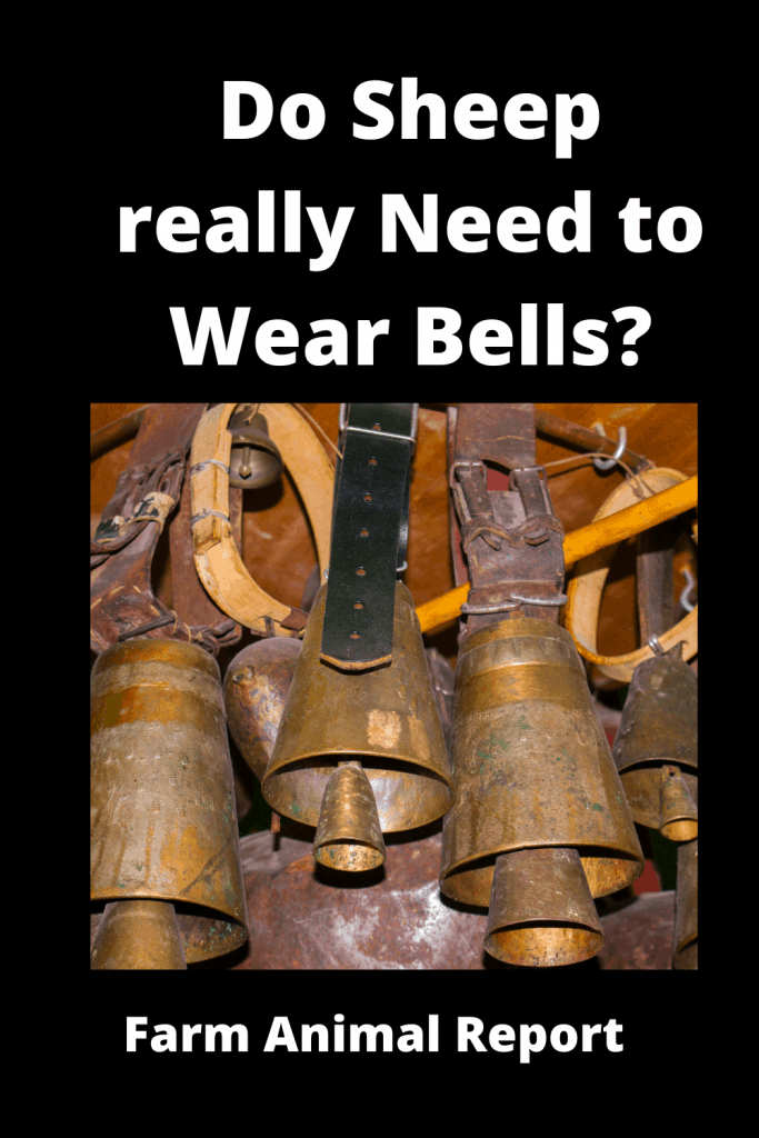 Do Sheep really Need to Wear Bells? 4