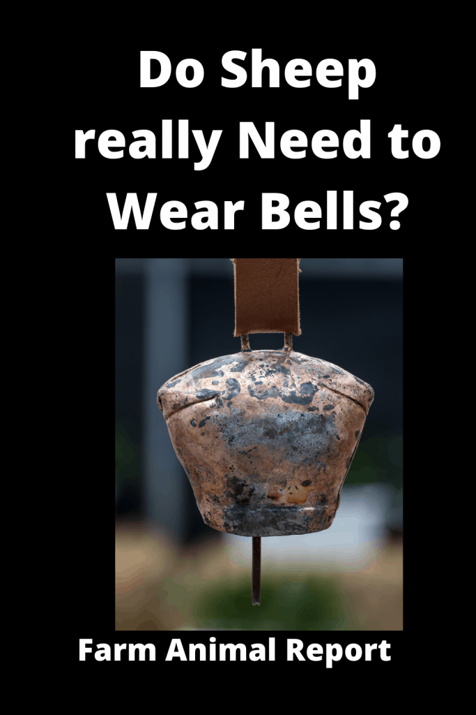 Do Sheep really Need to Wear Bells? 5