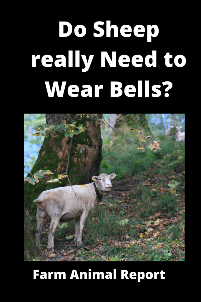 Do Sheep really Need to Wear Bells? 1
