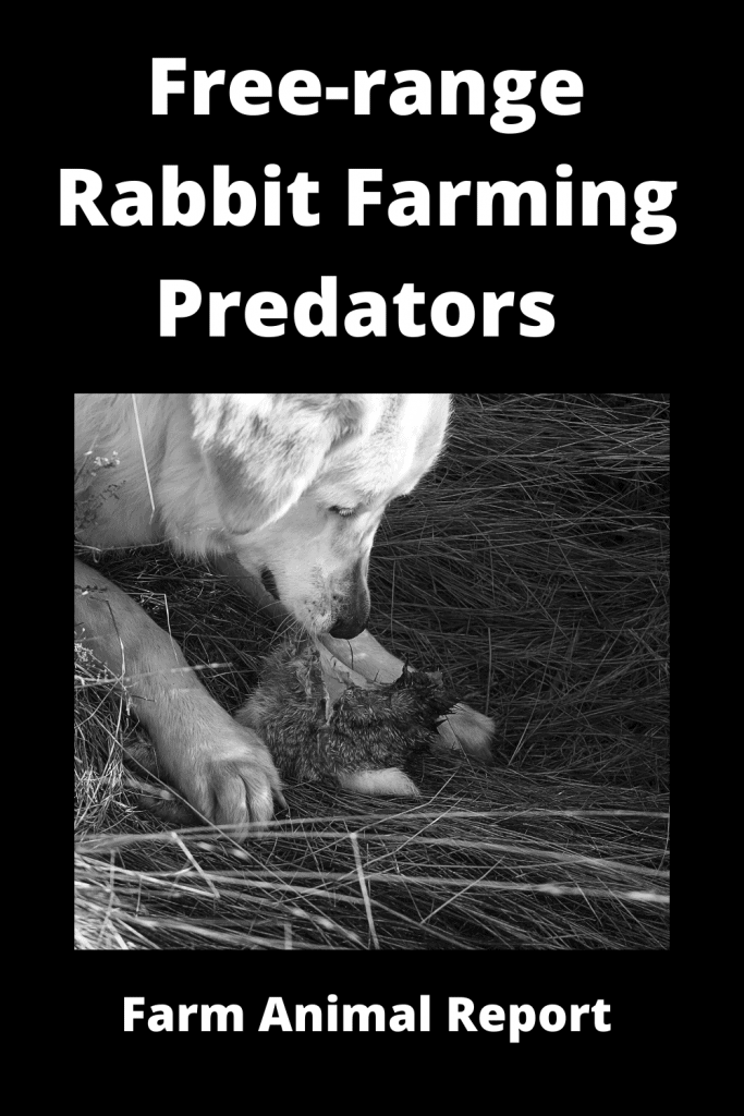 Free-range Rabbit Farming -  8 Types of Predators 2