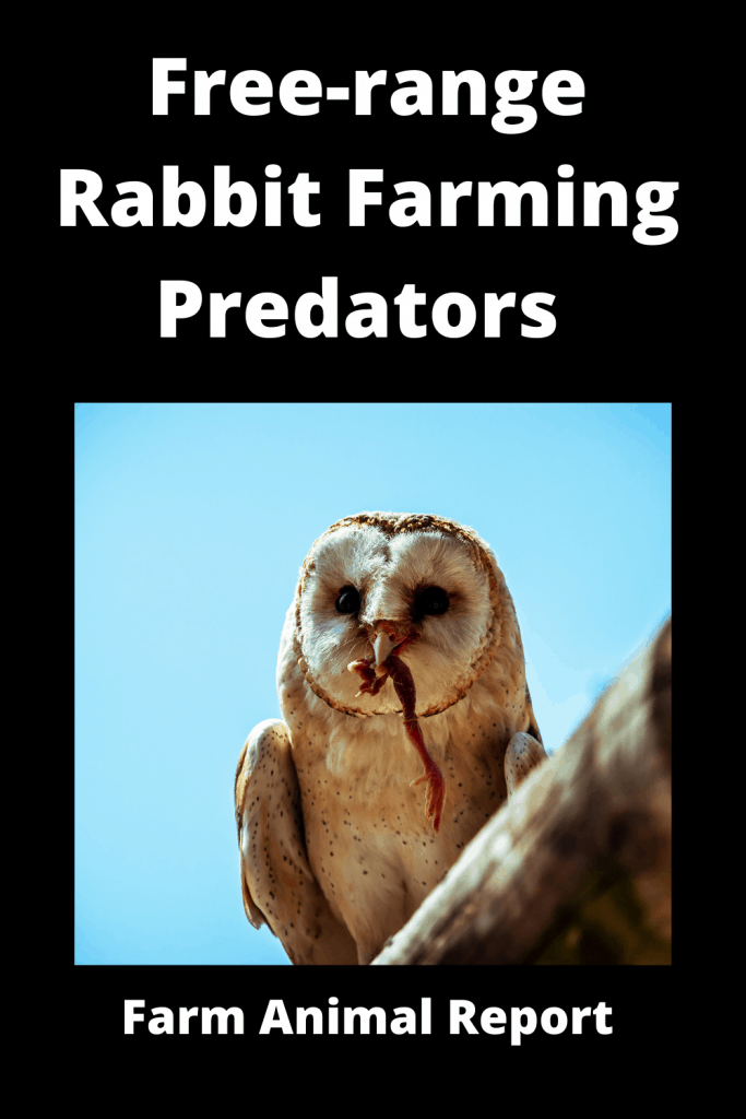 Free-range Rabbit Farming -  8 Types of Predators 3