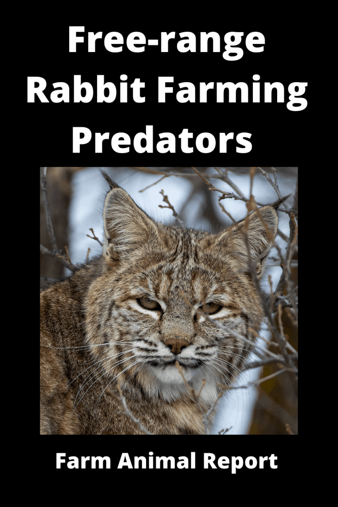 Free-range Rabbit Farming -  8 Types of Predators 5