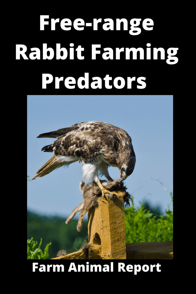 Free-range Rabbit Farming -  8 Types of Predators 1