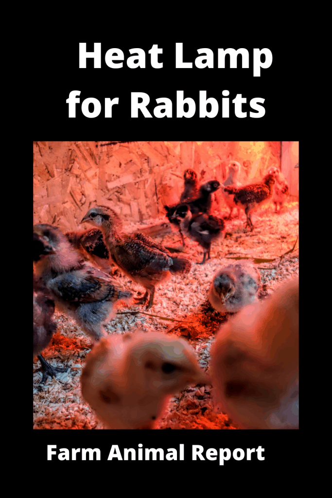 How to Set Up a Heat Lamp for Rabbits 3