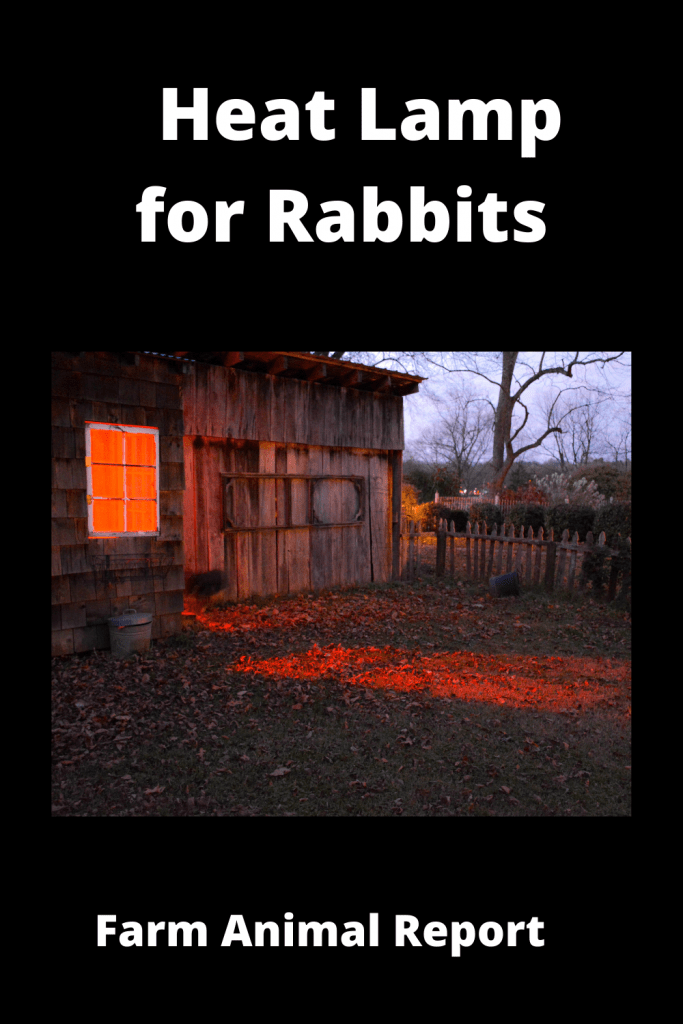 How to Set Up a Heat Lamp for Rabbits 1