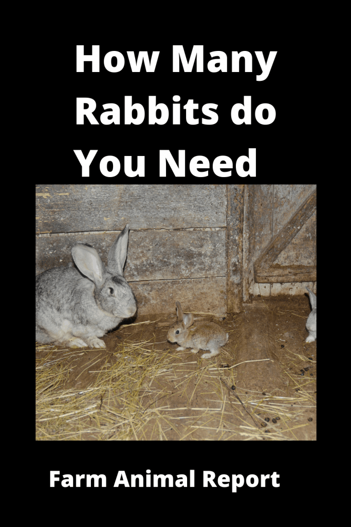 How Many Rabbits do you need to Start - With Videos 2