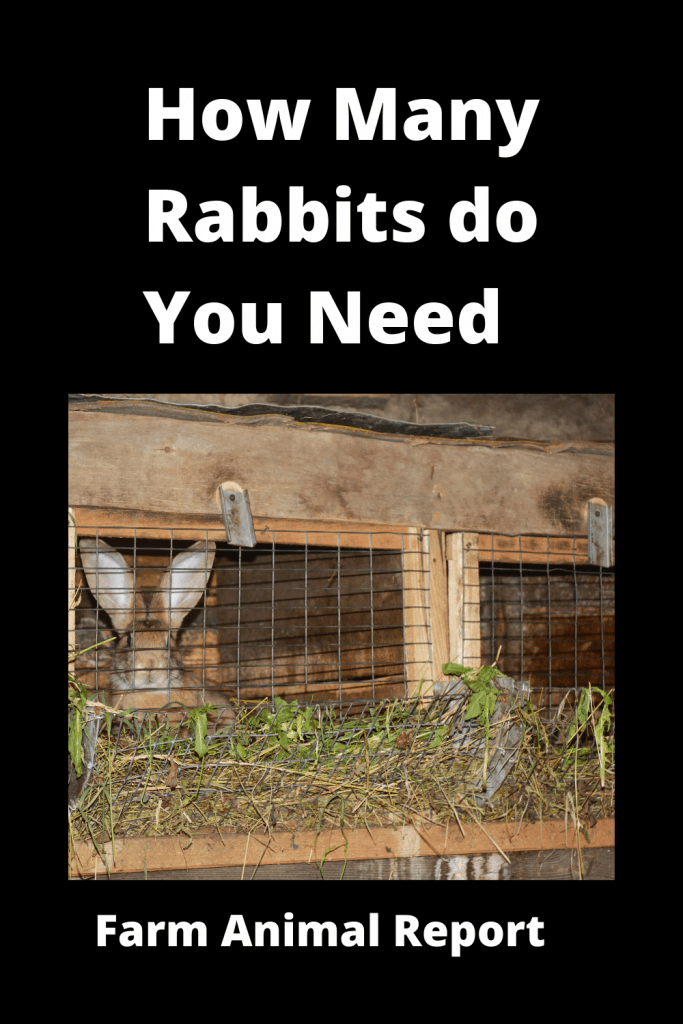 How Many Rabbits do you need to Start - With Videos 3