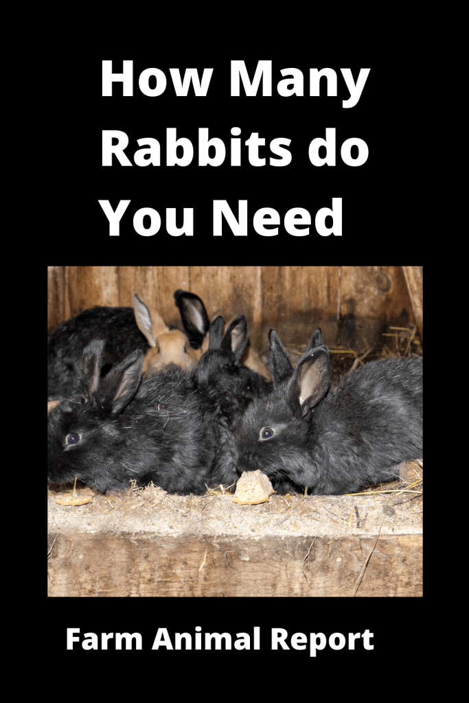How Many Rabbits do you need to Start - With Videos 4