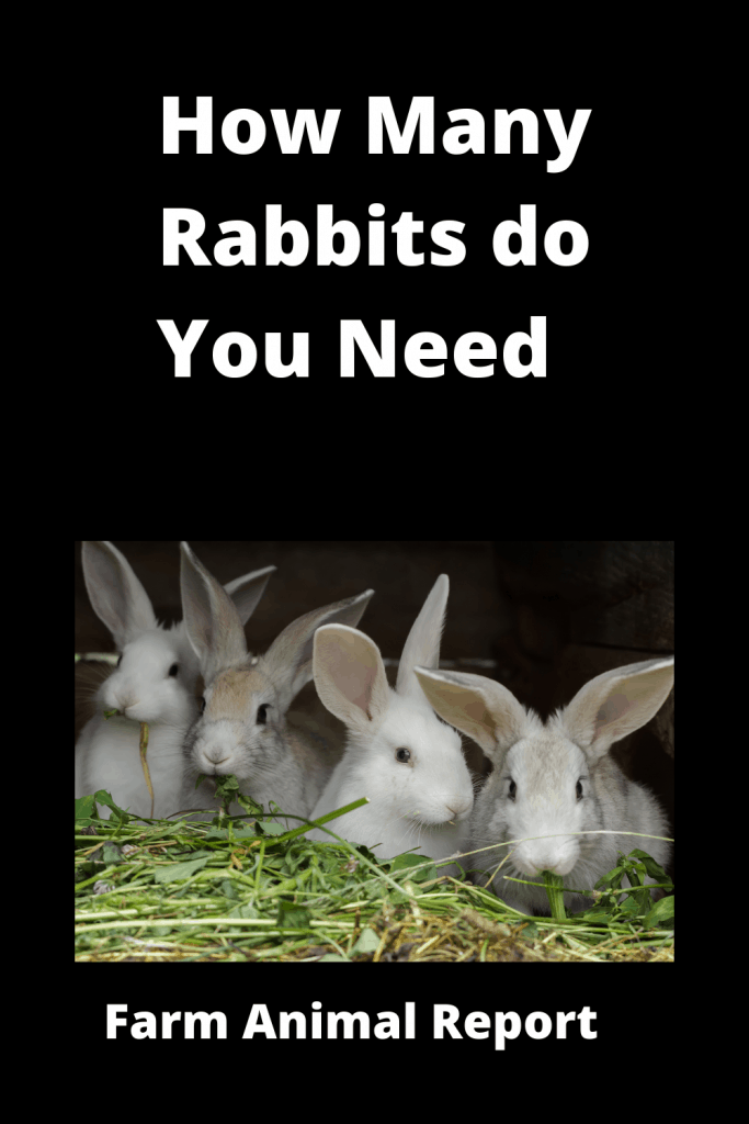 How Many Rabbits do you need to Start - With Videos 1