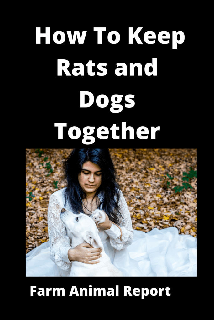 How To Keep Rats and Dogs Together: A Safety Guide 2