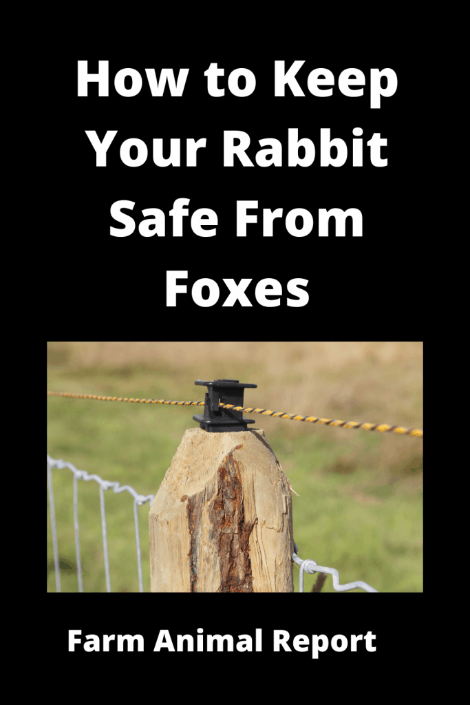 How to Keep Your Rabbit Safe From Foxes - 8 Solutions 5