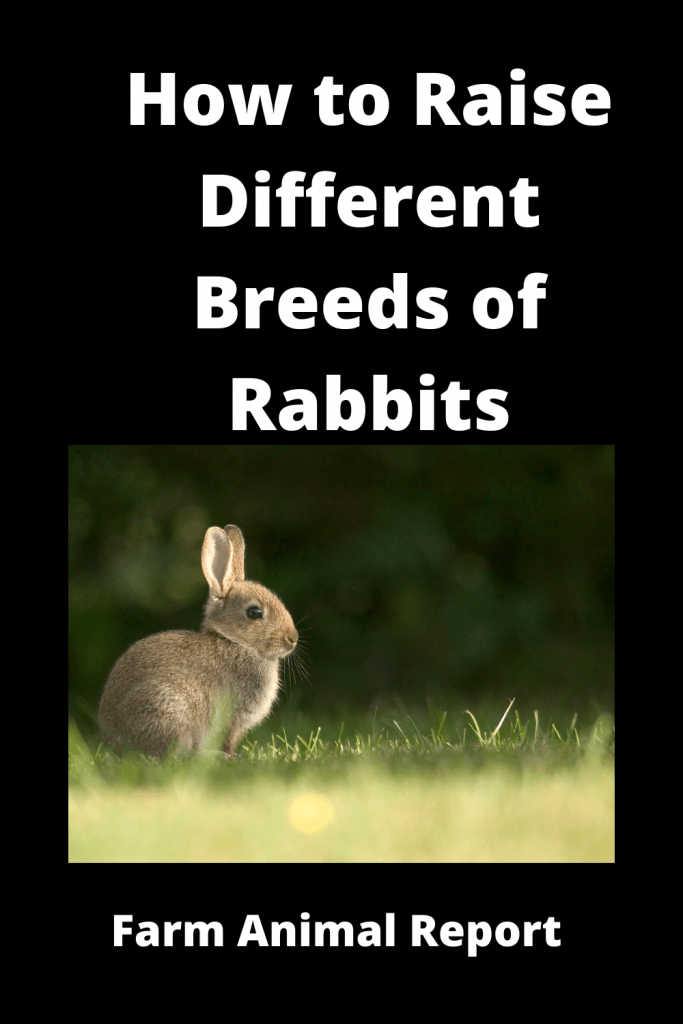 How to Raise Different Breeds of Rabbits / Tips 3