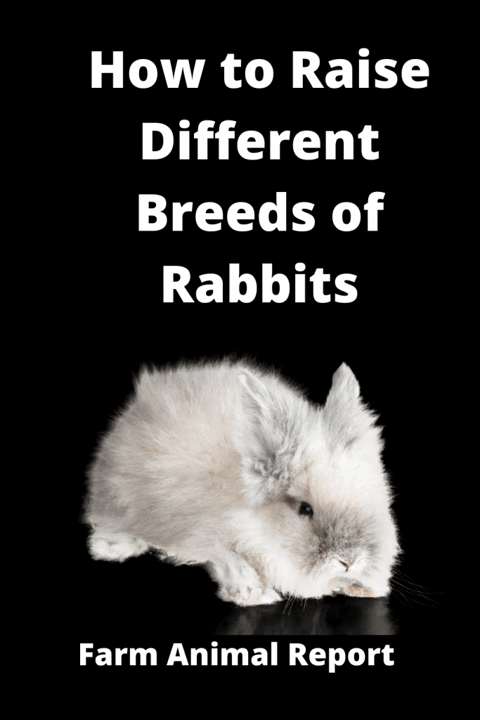 How to Raise Different Breeds of Rabbits / Tips 4
