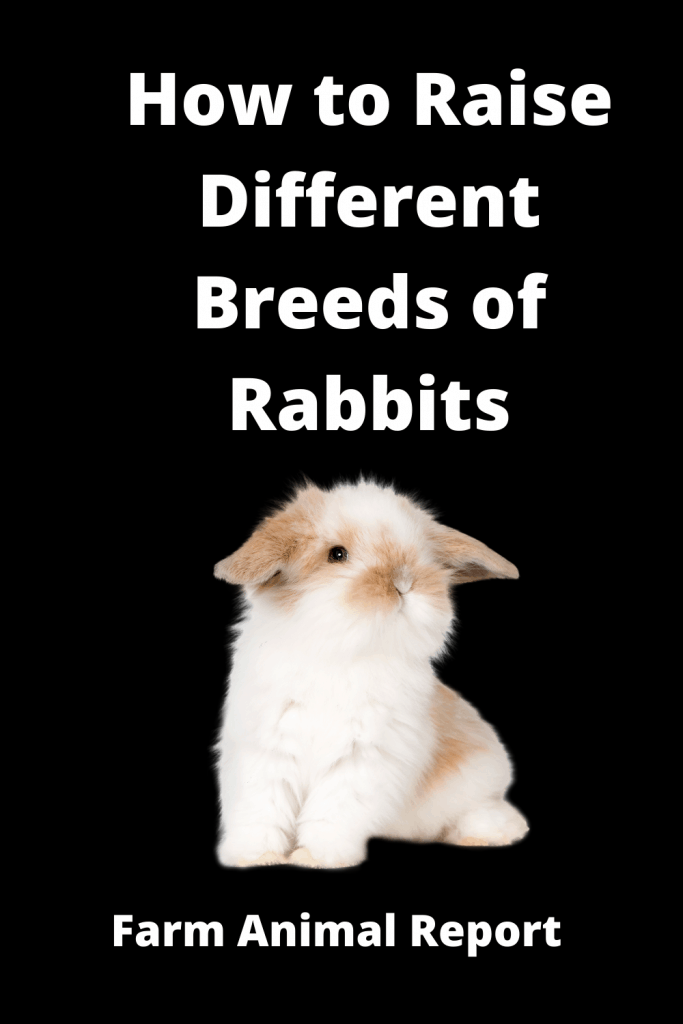How to Raise Different Breeds of Rabbits / Tips 5