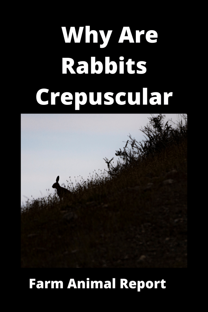 Why Are Rabbits Crepuscular (With Videos) 2