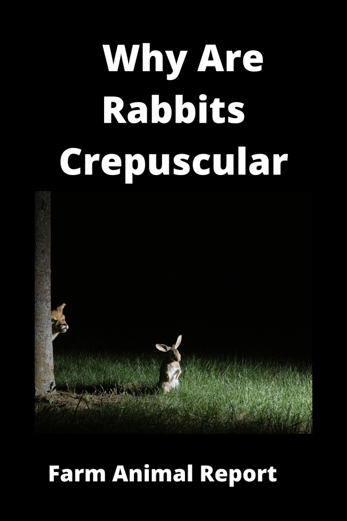 Why Are Rabbits Crepuscular (With Videos) 4