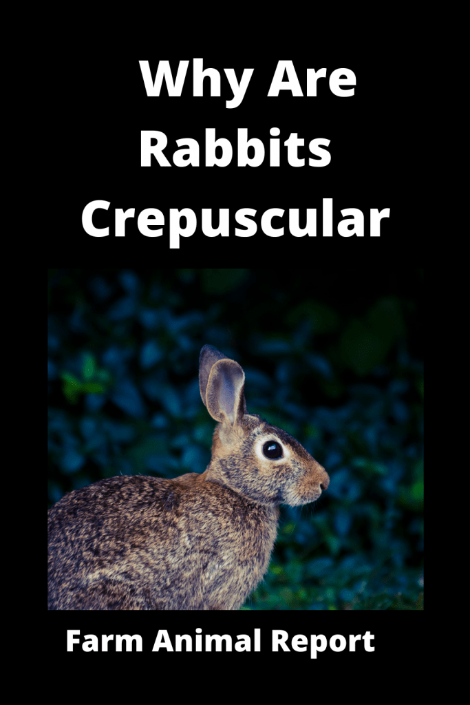 Why Are Rabbits Crepuscular (With Videos) 1