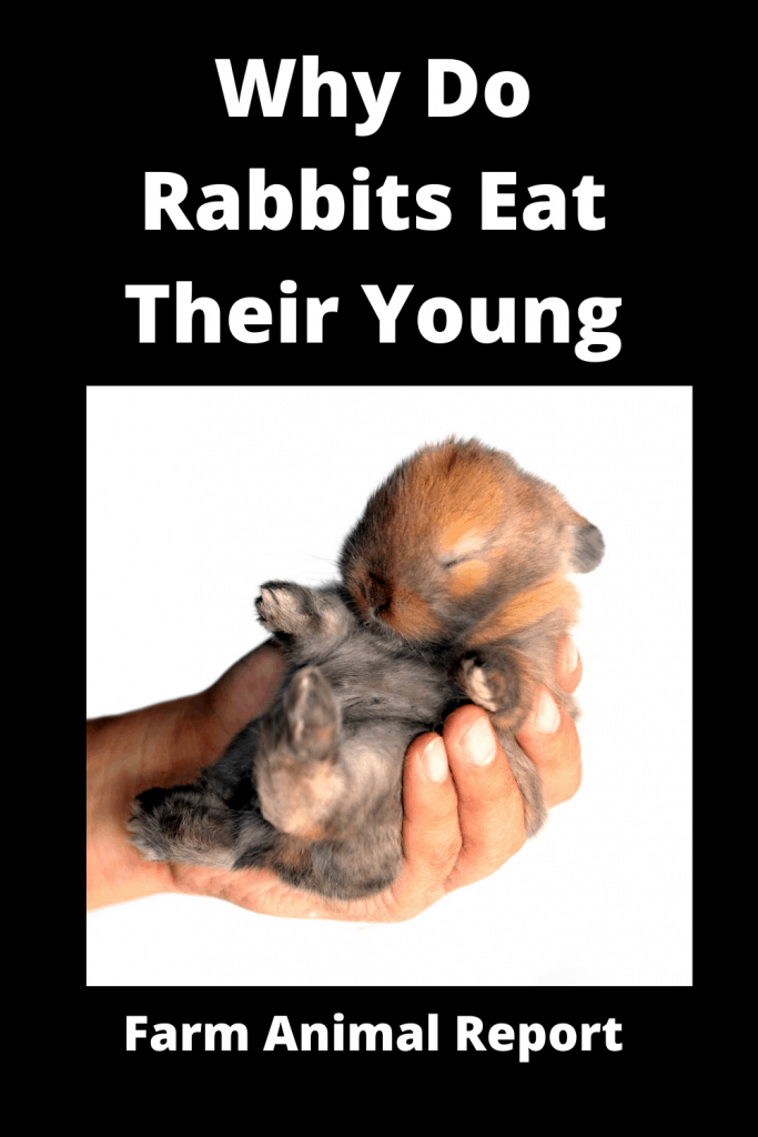 Why Do Rabbits Eat Their Young? (3 Videos) 2