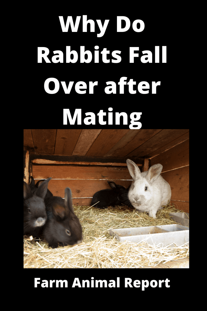 Why Do Rabbits Fall Over after Mating - 2 Videos / 4 Charts 2