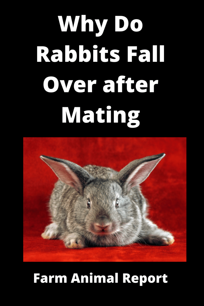 Why Do Rabbits Fall Over after Mating - 2 Videos / 4 Charts 3